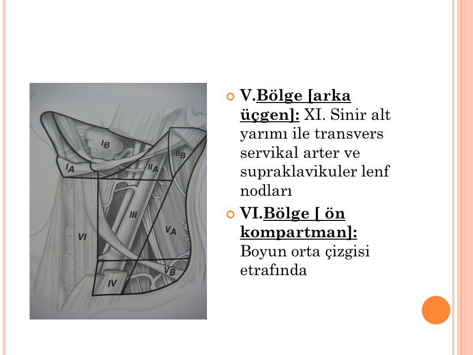 V. Bölge [arka üçgen]: XI